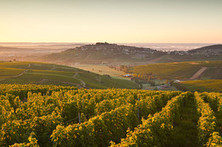 A New Taste for Old World Sauvignon | Wine, history and culture... | Scoop.it