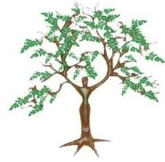 MORINGA MEDICINE: health benefits, healing properties, uses | Moringa Tree | Scoop.it