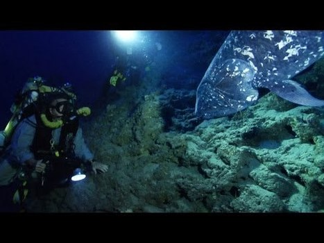 Coelacanth - The fish that time forgot... [Video] | Amazing Science | Scoop.it