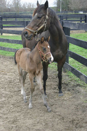 Foals being euthanized | News | Simcoe Reformer | horse slaughter | Scoop.it