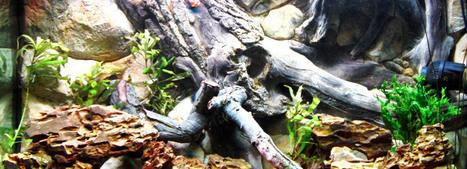 aquarium decoration ebay | Aqua-maniac.com | Scoop.it