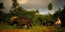 En photos, huit solutions pour sauver la planète - Télérama.fr | CDI RAISMES - MA | Scoop.it