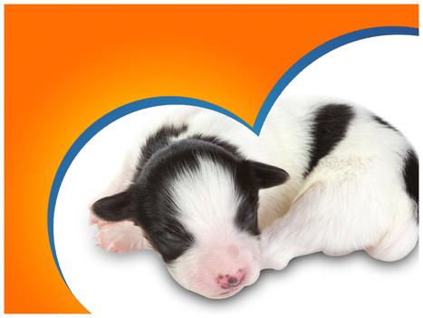 Download Animals PowerPoint Templates, Animals PPT Templates for Animals PowerPoint Presentation | PowerPoint Templates for Presentation | Scoop.it