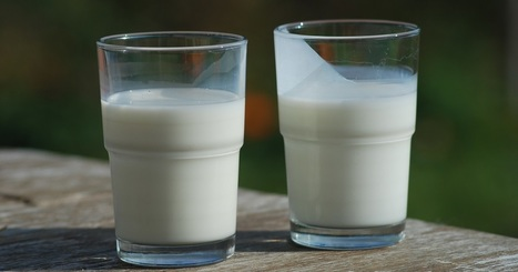 Here Are Some Reasons You Should Think Twice before Drinking Milk   Hawaii Science and Technology Digest   Scoop.it