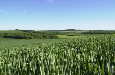 Sécurité alimentaire : La France au-dessus du lot - La France Agricole | la presse AGRIcole | Scoop.it