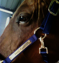 We Are Flying Solo: There And Back Again | From the Equine Blogosphere | Scoop.it