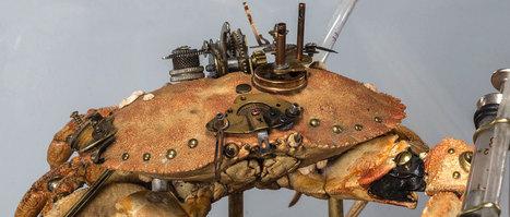 Insect Lab Studio | Arte-escultura | Scoop.it