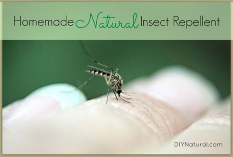 Homemade Mosquito and Insect Repellent - Keep Them Away Naturally   Aromatherapy plus   Scoop.it
