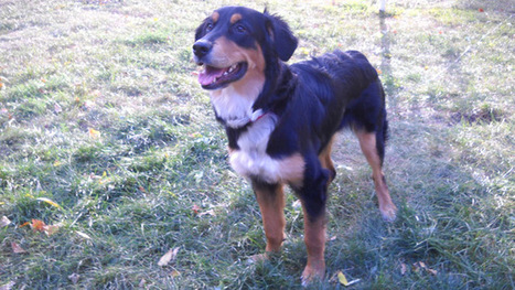 Rat poison dropped in Crystal, Minn. dog park | Minnesota Pet News | Scoop.it
