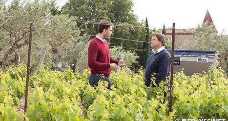 L'agro-œnologie : la conduite de la vigne au service de la qualité des vins | Du Sol Au Vin | Scoop.it