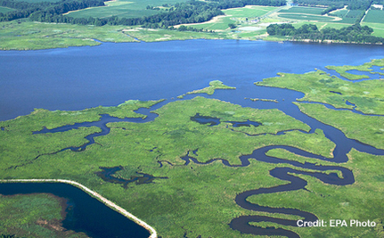 The Chesapeake's Poop Problem | Life on Earth | Scoop.it