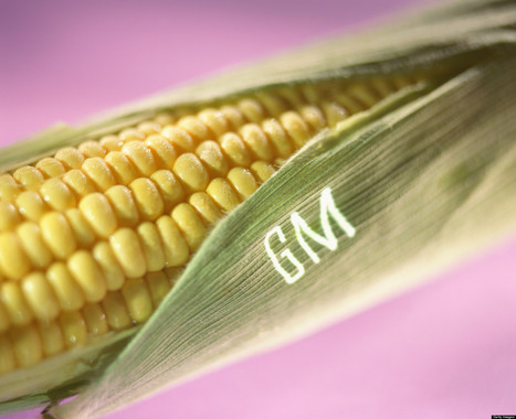 Bill Introduced To Congress To Mandate Labeling Of GMO Foods | Food in America | Scoop.it
