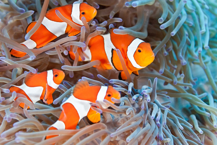 Anti-Anxiety Meds We're Flushing Down the Toilet Could Be Increasing the Lifespan of Fish | Earth Changes | Scoop.it