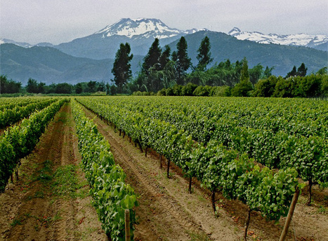 Small Wine Producers Imperiled as Chile Wants Higher Tax | Vitabella Wine Daily Gossip | Scoop.it