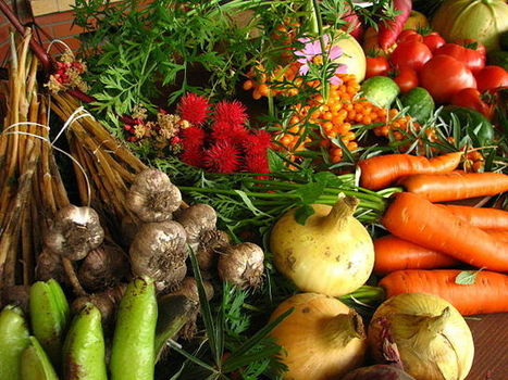 Study: Organic Can Feed the World Sustainably | Translation for sustainability | Scoop.it