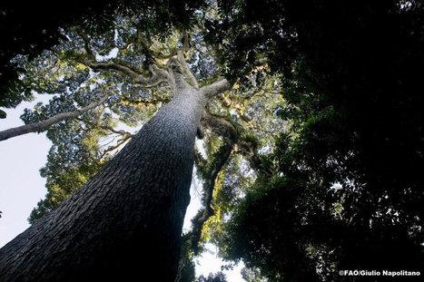 La FAO promeut l'agroforesterie, source de développement respectueuse de l'environnement   Des 4 coins du monde   Scoop.it