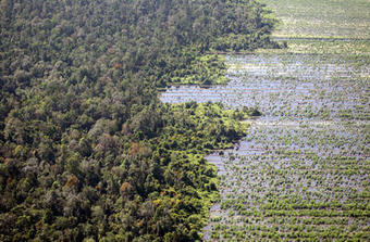 Indonesia's forests: a year into the moratorium | East Asia Forum | Forests Unlimited | Scoop.it