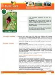 Auximore - Chambre régionale d'agriculture de Picardie   AGRONOMIE VEGETAL   Scoop.it