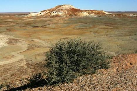 Australie: il survit six jours dans le désert en mangeant des fourmis - Yahoo Actualités France | 694028 | Scoop.it
