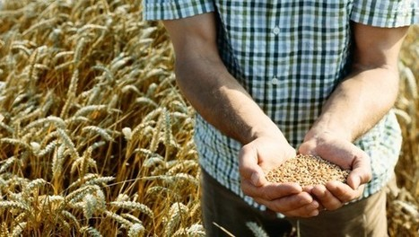 Business Opportunity: Africa Needs More Wheat Growers | WHEAT | Scoop.it