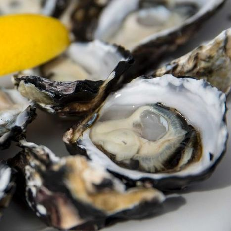 Tasmanian oyster growers take another hit with biotoxin scare | Aquaculture Directory | Scoop.it
