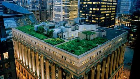 Chicago combate el cambio climático con azoteas verdes | Jardines Verticales y azoteas verdes. | Scoop.it