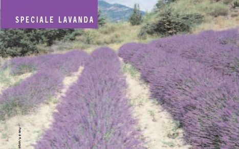 Speciale lavanda - Botanica by Natural1 | Informazione scientifica di fitoterapia, nutraceutica e cosmesi naturale | Scoop.it