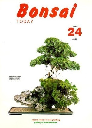 Bonsai Trees | Dominic Roberts | Scoop.it