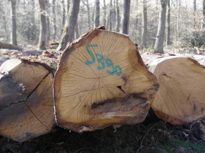 La filière forêt-bois lance sa première veille économique mutualisée - Entreprises de BTP | Bois, forêt, construction, bois énergie, ameublement et plus | Scoop.it
