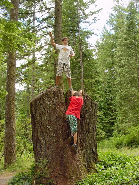 Why Trees Matter | 100 Acre Wood | Scoop.it