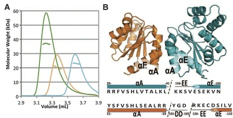 Science: Structural Basis for Assembly and Function of a Heterodimeric Plant Immune Receptor (2014) | Plant-Microbe Interaction | Scoop.it