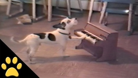 Small Dog Practices His Vocal Scales on Tiny Toy Piano | Pet Health | Scoop.it
