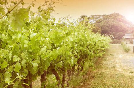 Schloss Johannisberg,Chateau Ste. Michelle,Schloss Gobelsburg...Spring For These Rieslings | Vitabella Wine Daily Gossip | Scoop.it