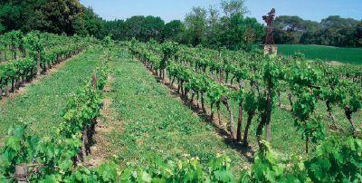 Œnotourisme - Une parcelle de vigne transformée en labyrinthe | Agritourisme et gastronomie | Scoop.it