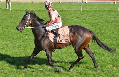 Australia's most famous mare, Black Caviar, in foal to Sebring! | Horse Racing News | Scoop.it