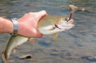Do #Fish Feel Pain? The Debate Continues, read below... | Rescue our Ocean's & it's species from Man's Pollution! | Scoop.it