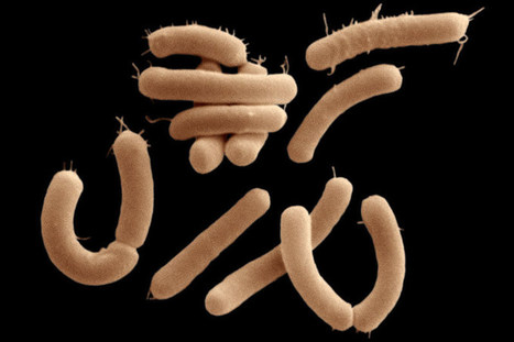Gut bacteria spotted eating brain chemicals for the first time   Mental Health   Scoop.it