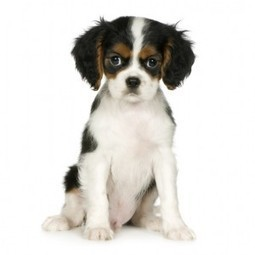 Buying Your Child's First Pet: A Guide | Child Care | Kids-parenting | Scoop.it