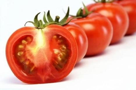 Des tomates pour augmenter la fertilité masculine ? La nutrition expliquée aux footeux ! | Univers des compléments alimentaires | Scoop.it