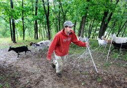 Man rents out goats to chew up invasive species - La Crosse Tribune | invasive species | Scoop.it