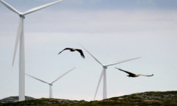 Wind Energy Threat to Birds Is Overblown | EcoWatch | Scoop.it
