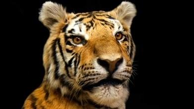 An exclusive look inside a secret wildlife crime exhibit room   Endangered Species News   Scoop.it