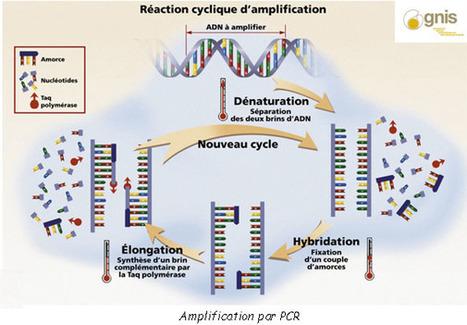 Analyse de l'ADN - Police Scientifique | J'écris mon premier roman | Scoop.it