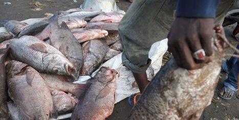 Bruxelles publie une liste de pays favorisant la pêche pirate | Biodiversité | Scoop.it