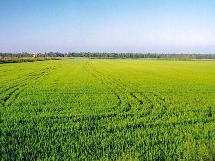 Periti e Laureati Agrari: come ottenere l'esenzione dal tirocinio di 1900 ore | Stage e Tirocini | Scoop.it