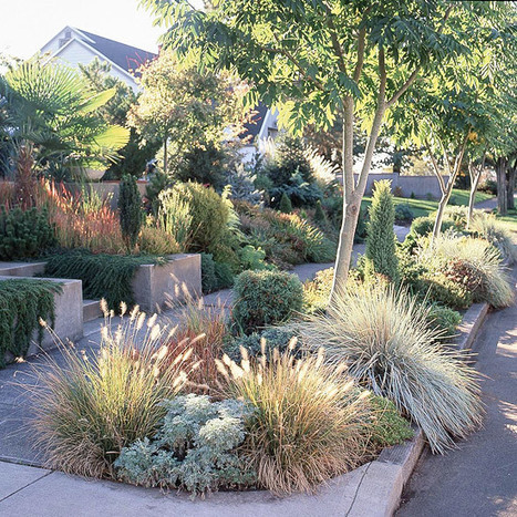 Japanese bloodgrass In place of grass, choose drought-tolerant plantings, which are more likely to prevent erosion. Shade, too, can be a necessary element in the fight against water loss: Plants lo... | Japanese Gardens | Scoop.it