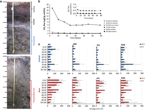 Impact of fire on active layer and permafrost microbial communities and metagenomes in an upland Alaskan boreal forest | Plant-Microbe-Interactions | Scoop.it