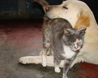 Dog Saves Cat's Life | Facts Village | Funny Pics Online | Scoop.it