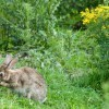 Rabbit-Proof Perennials Which Naturally Keep Peter Rabbit Out of the Garden | Fall Perennials | Scoop.it