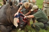 South African wildlife vet Dr Will Fowlds talks in London on rhino conservation | The South African | Kruger & African Wildlife | Scoop.it